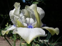 'Ad Hoc'