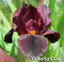 'O Bella Ciao' - SDB - 30cm