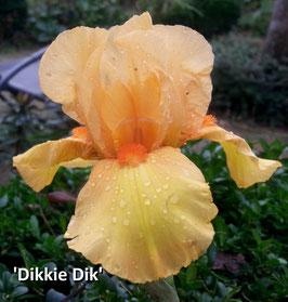 'Dikkie Dik'