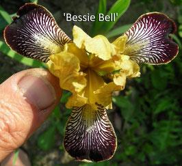 'Bessie Bell'