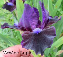 'Arsène Lupin'