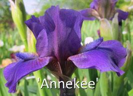 'Annekee'