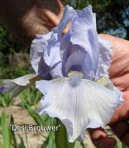 'Desi Brouwer'
