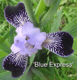 'Blue Express'