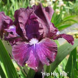 'Hip Hip Hip'
