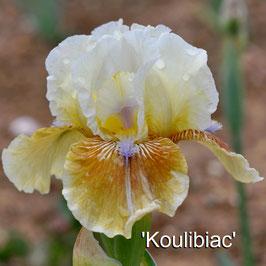 'Koulibiac'