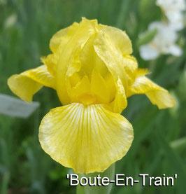 'Boute-En-Train'
