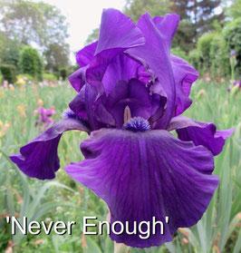 'Never Enough''