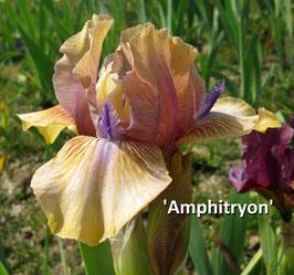 'Amphitryon'