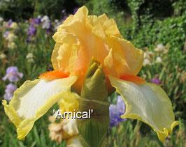 'Amical'