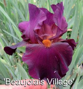 'Beaujolais Village'
