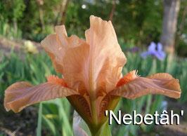 'Nebetâh'