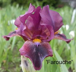 'Farouche'