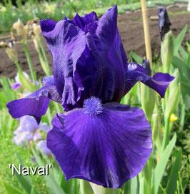 'Naval'