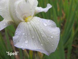 'Spell'