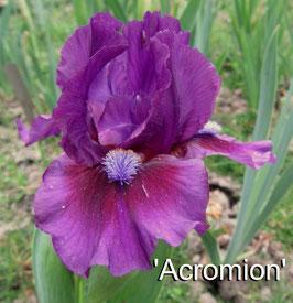'Acromion'