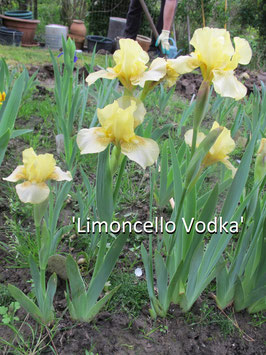 'Limoncello Vodka'