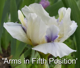 'Arms in Fifth Position'