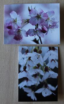 Bloesem- kaartenset
