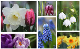 Vrolijk Voorjaar Kaarten-set