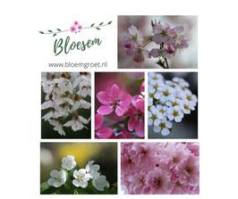 Bloesem-kaartenset