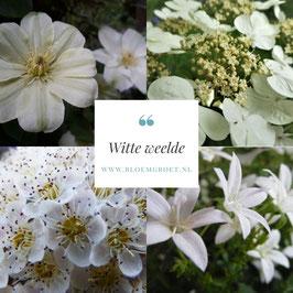 Witte Weelde- set