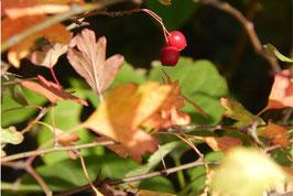 """""""Herbst"""""""