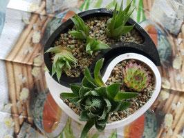 Yin - Yang - Pflanzschalen - unbepflanzt