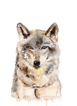 ILLUSTRATION WOLF