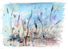 Gräser im Spätsommer