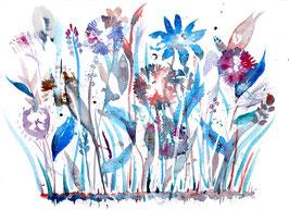 Winterwunderblumen