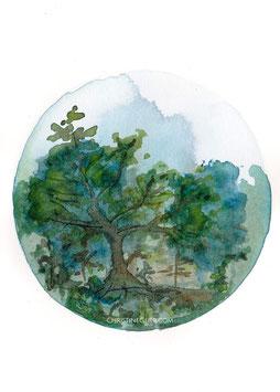 Sommerwaldwelt