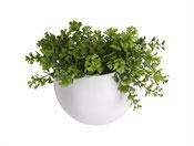 Wall Plant Pot weiß