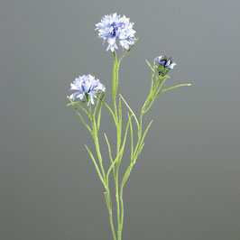Kornblume light blue