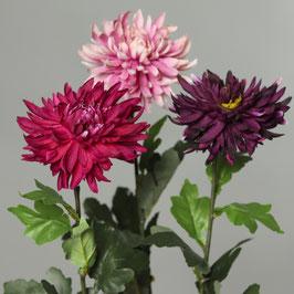 Chrysantheme 3 Farben