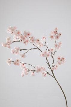 Kirschblüte XXL