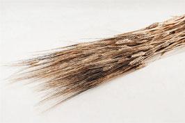 Weizen schwarzer Bart