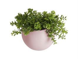 Wall Plant Pot rosa