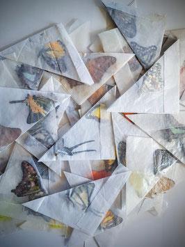 Ongeprepareerde vlinders divers 10 stuks