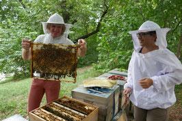 BIO-Stadtbienen und Stadtimkerei-Tour