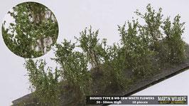 WB-SBW white Flowers je 10 Stck. 30-50mm Hoch