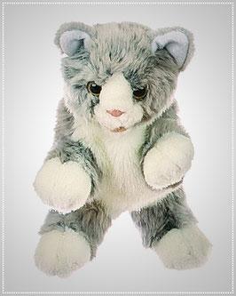 Kleine graue Katze W181