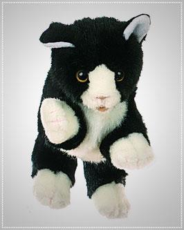Kleine schwarz/weisse Katze W045