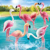 70351 Flamingoschwarm