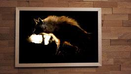 Hyène brune 1 Couleur - 40 x 60 cm + CADRE
