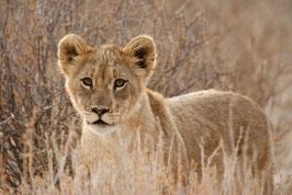 Lionceau 1 - 20 x 30 cm