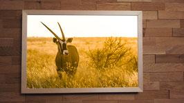 Oryx au couchant - 40 x 60 cm + CADRE