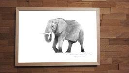 Eléphant à bottes - 40 x 60 cm + CADRE