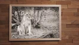 Lionne en observation - 40 x 60 cm + CADRE