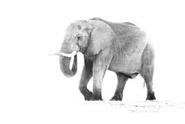 Eléphant à bottes - 40 x 60 cm